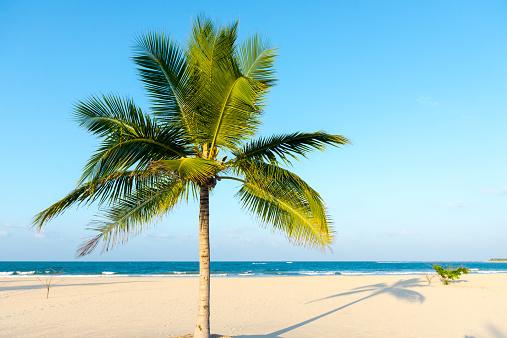 Single Tree「Coconut tree on idyllic beach, Sri Lanka」:スマホ壁紙(6)