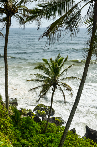 アラビア海「Coconut trees near cliff with Arabian sea」:スマホ壁紙(13)