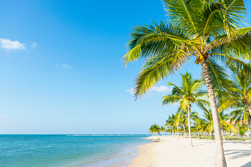 Beach「Coconut trees on beach, Sri Lanka」:スマホ壁紙(9)