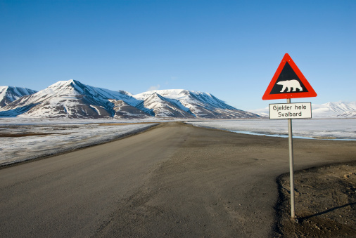 Svalbard Islands「Road sign with polar bear」:スマホ壁紙(6)