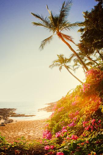 南国「Tropic beach sunrise」:スマホ壁紙(16)