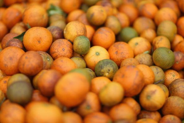Orange - Fruit「Citrus Greening Diseases Threatens Florida's Orange Industry」:写真・画像(13)[壁紙.com]