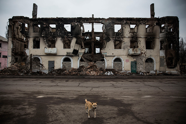 動物「Conflict In Eastern Ukraine Takes Its Toll On Donetsk Region」:写真・画像(11)[壁紙.com]