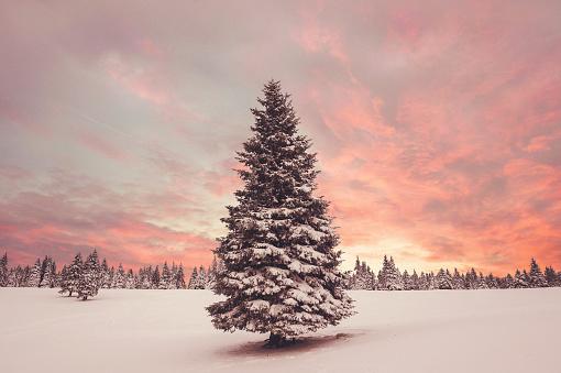 Wilderness Area「Winter Sunset」:スマホ壁紙(12)