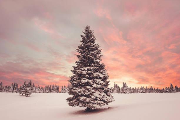 Winter Sunset:スマホ壁紙(壁紙.com)