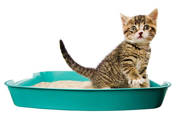 kitten in the litter box:スマホ壁紙(壁紙.com)
