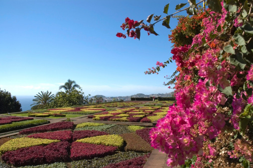 Atlantic Islands「Botanical Garden, Funchal, Madeira」:スマホ壁紙(15)