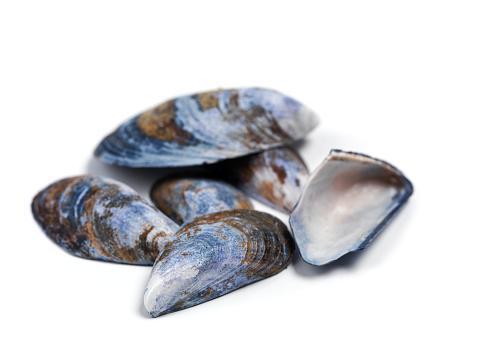 Mussel「Blue mussels from the sea」:スマホ壁紙(2)
