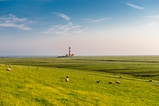 UNESCO World Heritage Site「Germany, North Frisia, Westerheversand Lighthouse with sheep on meadow」:スマホ壁紙(19)