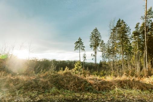 Back Lit「Germany, North Rhine-Westphalia, Bonn, ferns and trees in Waldau on Venusberg at sunrise」:スマホ壁紙(14)