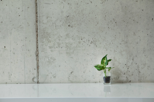 Concrete Wall「Germany, North Rhine Westphalia, Cologne, Potted plant on floor」:スマホ壁紙(9)