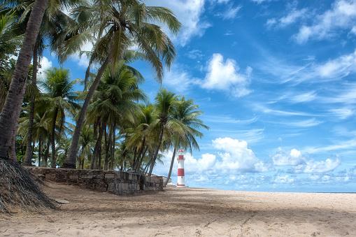 Island「Beach of Itapõa lighthouse with coconut trees in the background on sunny day, Salvador, Bahia, Brazil」:スマホ壁紙(5)