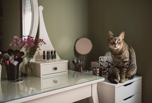 Staring「Staring cat sitting on cabinet beside a vanity」:スマホ壁紙(13)