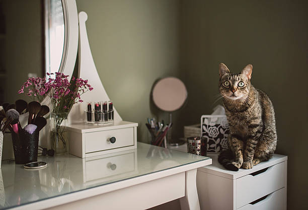 Staring cat sitting on cabinet beside a vanity:スマホ壁紙(壁紙.com)
