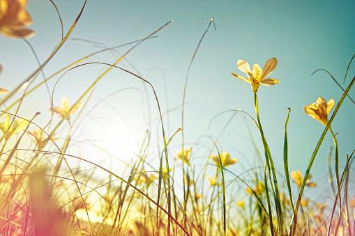 Springtime「looking up at wild flowers」:スマホ壁紙(10)