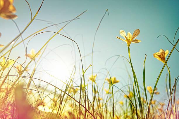 looking up at wild flowers:スマホ壁紙(壁紙.com)