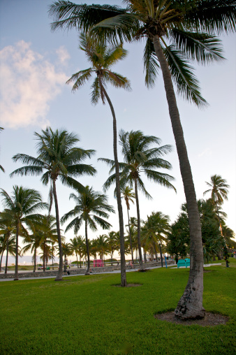 Miami Beach「Looking up at palm trees against sky near sunset」:スマホ壁紙(7)