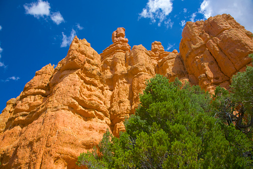 Tree「Looking up at orange and green colors in nature at Red Canyon, Utah」:スマホ壁紙(17)