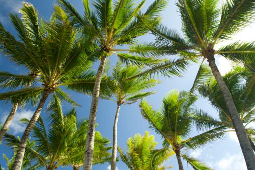Frond「Looking up at palms.」:スマホ壁紙(11)