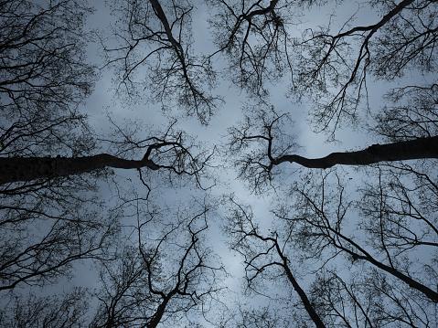 Horror「Looking up at spooky trees in dark woodlands」:スマホ壁紙(10)