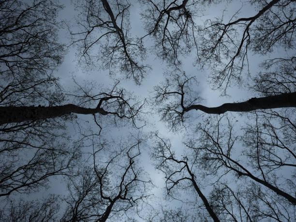 Looking up at spooky trees in dark woodlands:スマホ壁紙(壁紙.com)