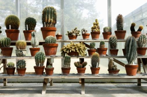 Rack「A lot of cactuses in botanical garden」:スマホ壁紙(19)