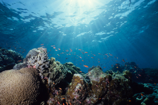 Tropical Climate「Close-up underwater shot of a colorful reef」:スマホ壁紙(15)