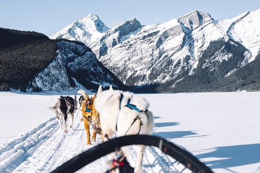 Dogsledding「Dogs pulling a sledge, Spray Lakes, Kananaskis Country, Canmore, Alberta, Canada」:スマホ壁紙(0)