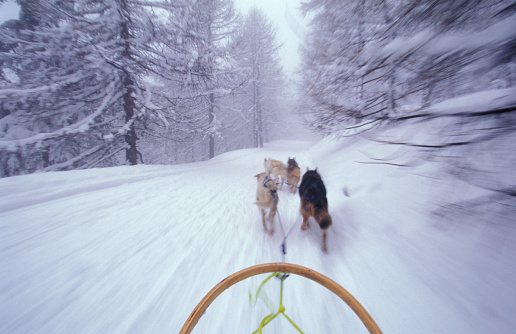 Dogsledding「Dogs Pulling Sled on Colle S. Carlo near Courmayeur Ski Resort」:スマホ壁紙(14)