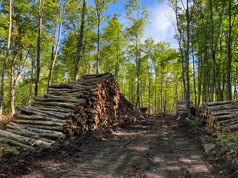 Deforestation「Logs piled up after being cut in a forest.」:スマホ壁紙(14)