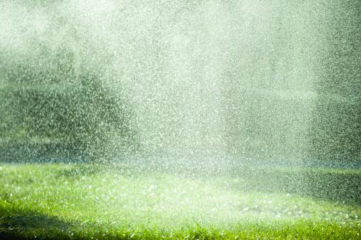 雨「Rain falling on grass」:スマホ壁紙(17)