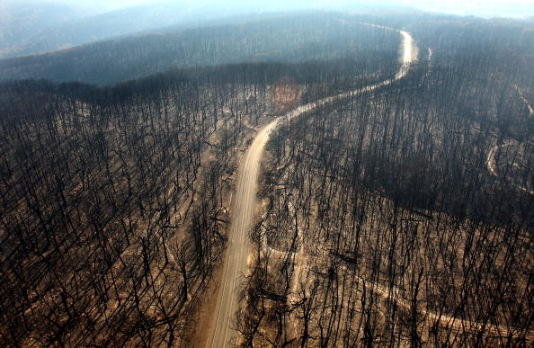 Forest Fire「Death Toll Nears 200 As Bushfires Continue To Blaze Through Victoria」:写真・画像(8)[壁紙.com]