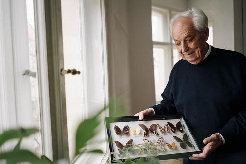 雪「Senior man at home showing his butterfly collection」:スマホ壁紙(19)