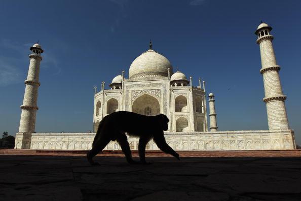 Monkey「Scenes Of India」:写真・画像(10)[壁紙.com]