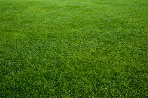 Grass「Green grass field」:スマホ壁紙(14)