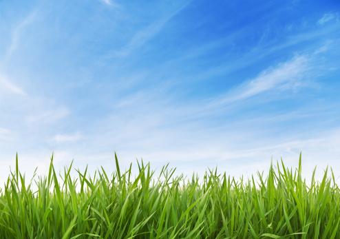 Beginnings「Green Grass and sky XXXL 70 mpx」:スマホ壁紙(2)