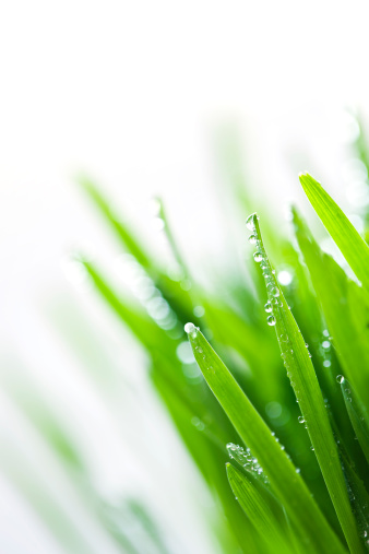 Raindrop「Green grass」:スマホ壁紙(4)
