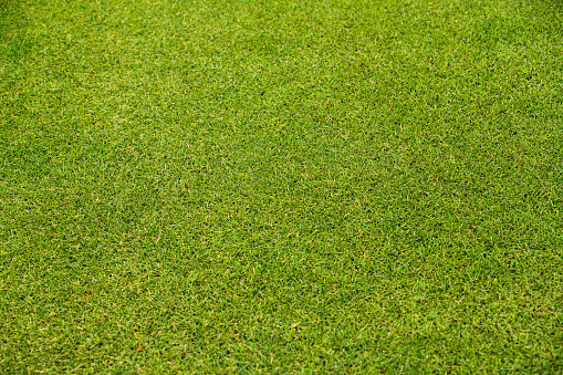 Grass「Green Grass Background.」:スマホ壁紙(5)
