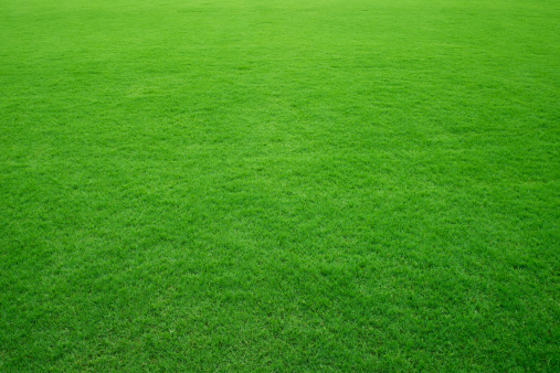Saturated Color「Green grass background」:スマホ壁紙(2)