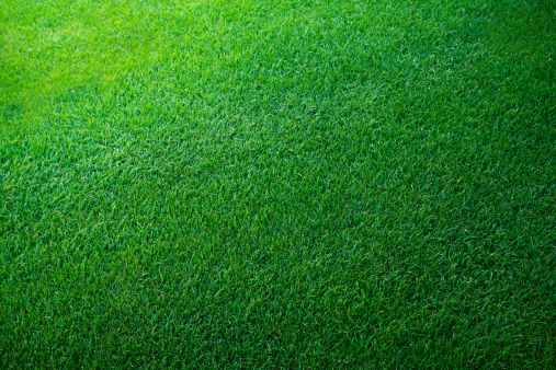 Textured「Green grass background」:スマホ壁紙(13)