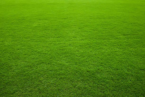 緑の芝生の背景:スマホ壁紙(壁紙.com)