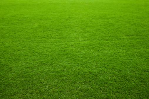緑色「緑の芝生の背景」:スマホ壁紙(6)