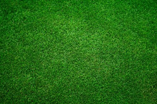 春「緑の芝生の背景」:スマホ壁紙(14)