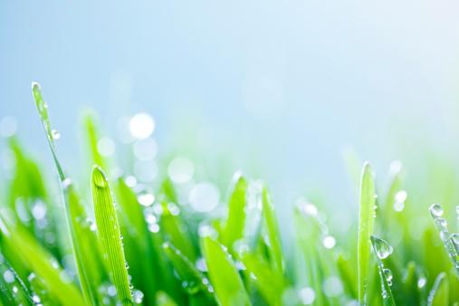 Drop「Green grass background」:スマホ壁紙(9)