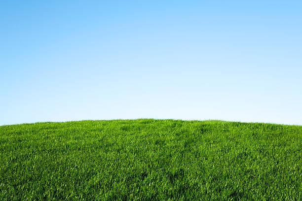 Green Grass and Blue Sky:スマホ壁紙(壁紙.com)