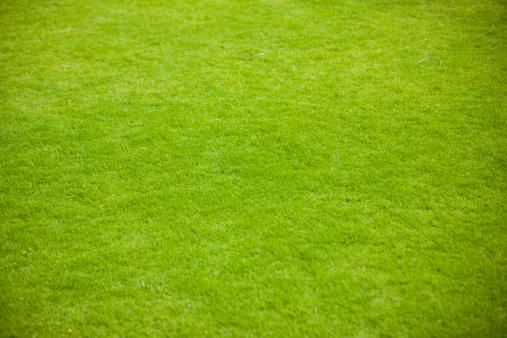 Lawn「Green grass」:スマホ壁紙(3)