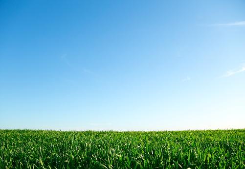イースター「緑の芝生、ブルースカイ」:スマホ壁紙(3)