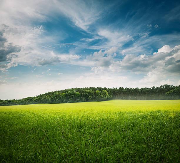 green grass landscape:スマホ壁紙(壁紙.com)
