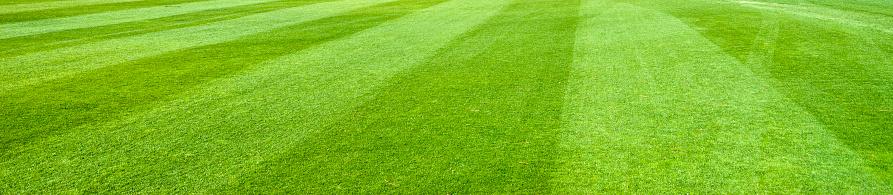 平面「緑の芝生」:スマホ壁紙(10)