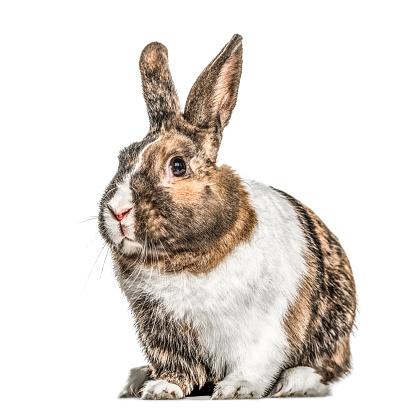 うさぎ「Multicolored rabbit, isolated on white」:スマホ壁紙(18)
